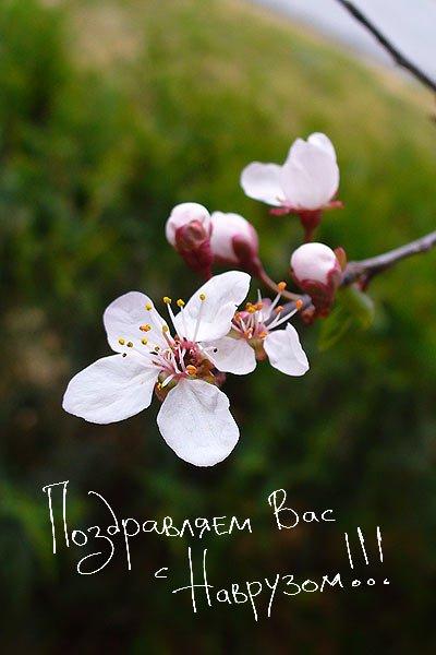 С праздником весны, Наврузом!